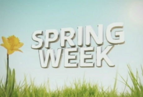 Insight Days/Spring Weeks